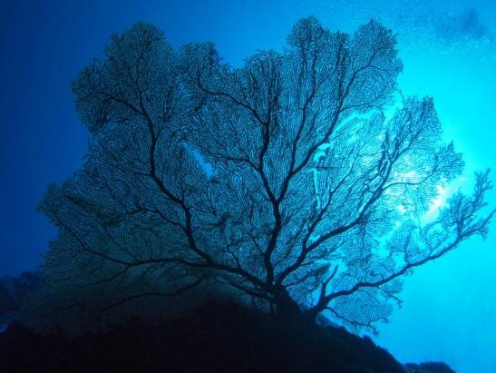 グアム ダイビングポイント クレバス 豪快な地形の美しさにうっとりすること間違いなし!