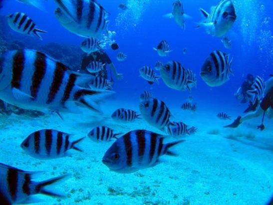 グアム ダイビングポイント ハップスリーフ ホワイトサンドが広がる明るい海