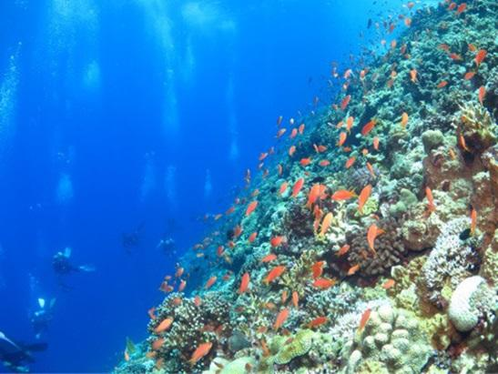 沖縄本島 ダイビングポイント 黒島北ツインロック 魚影が濃い!