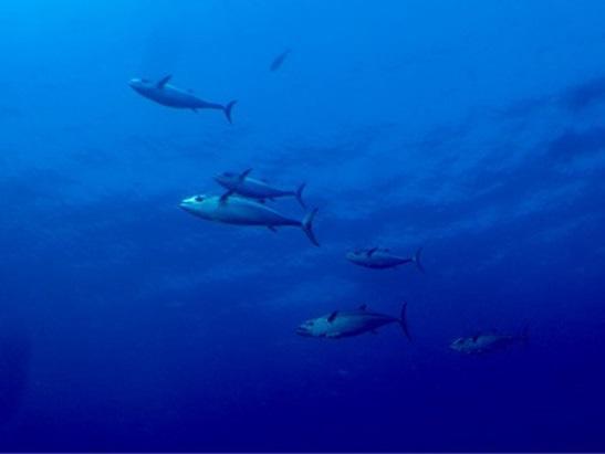 沖縄本島 ダイビングポイント 下曽根 別格のオーラを放つ隠れ根!